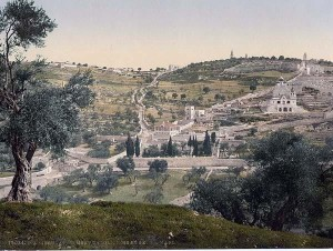 Mount of Olives and Gethsemane. 1890-1900. Photochrome Print